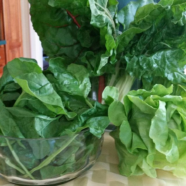 First share of the season spinach lettuce and Swiss chard!! Enjoy #vtorganic #farmtotable