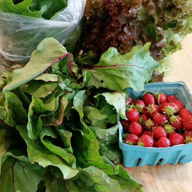 In this weeks share lettuce, beet greens, spinach, and half got strawberries. If you didn't get them this week you will in the next week or two. Enjoy!#farmtotable #vtorganicfarming #mayapapayacsa