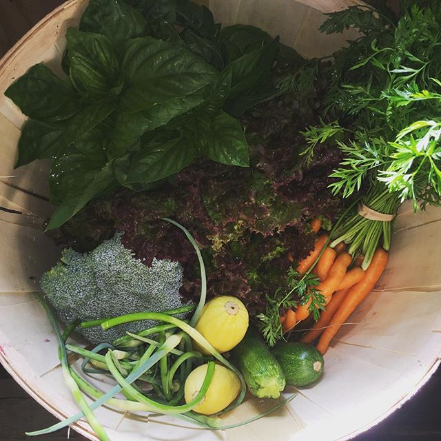 In this weeks share basil, zucchini, summer squash, lettuce, carrots, broccoli, garlic scapes. #mayapapayacsa#vtorganicfarming#farmtotable#bostonchefs