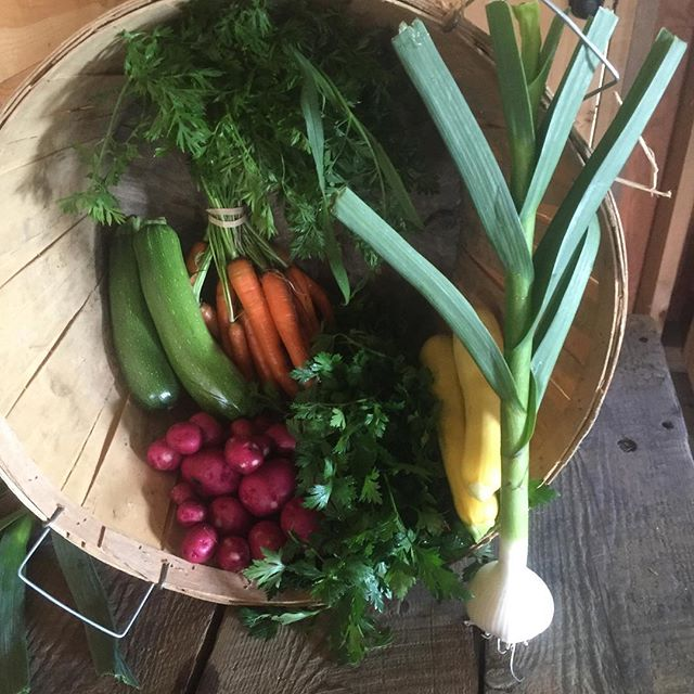 This weeks share summer squash, zucchini, garlic, carrots, red potatoes, parsley, enjoy #mayapapayacsa #vtorganicfarming #farmtotable #bostonchef